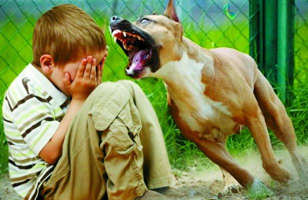 укусы собак
